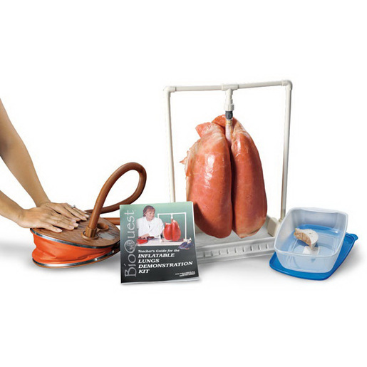 BioQuest Inflatable Lung Kit