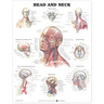 Laminated Anatomical Chart, Head and Neck