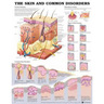 Laminated Anatomical Chart, Skin and Common Disorders